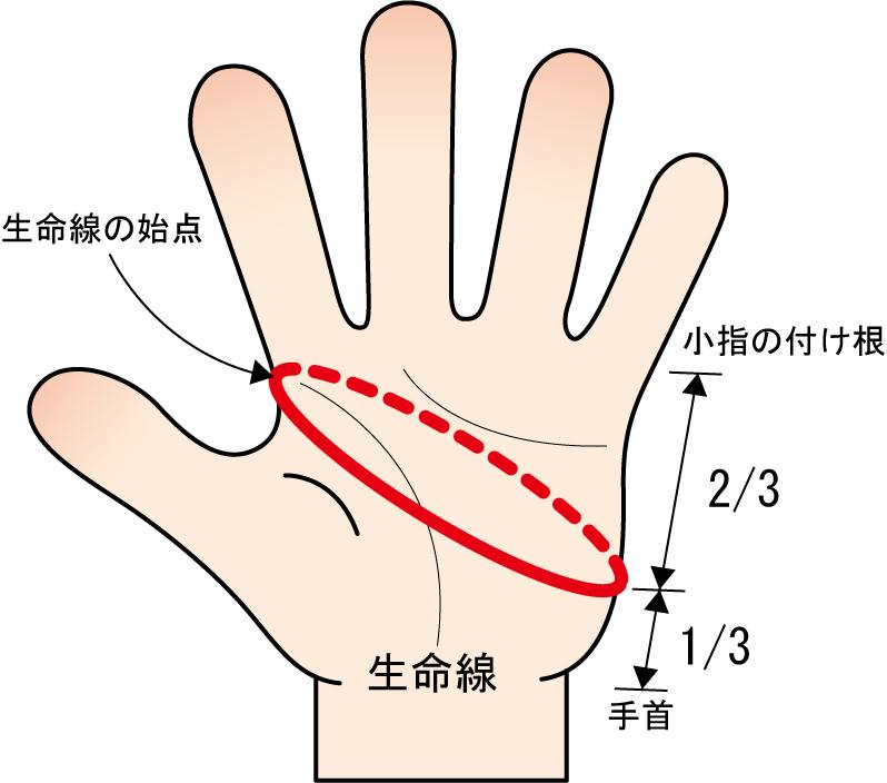 バッティング手袋のサイズの測り方